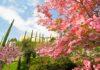 La primavera_ai_Giardini_di_Sissi