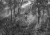 JAKOB DE BOER - Origin Collecting Firewood Tanzania 2015 - Catalogue Cover