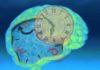 tempo cervello