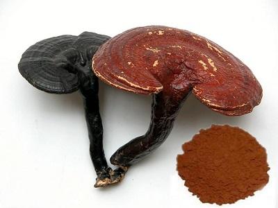 Ganoderma Lucidum Spore Powder Reishi 24