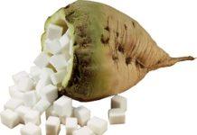 bietola-con-zucchero coprob
