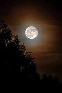 Orticolario - Luna | foto di ph Luciano Movio