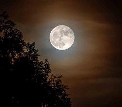 Orticolario - Luna ph Luciano Movio b