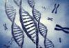 Geni malattie genetiche gravidanza