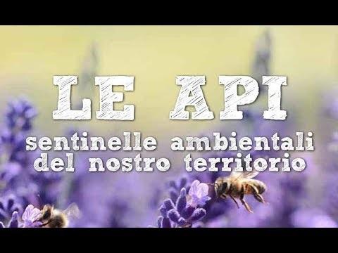 LE API SENTINELLE