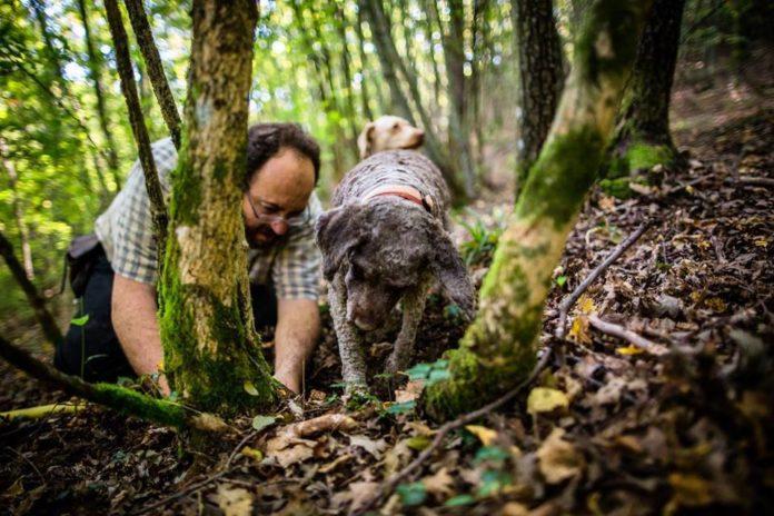 ALESSANDRO con i suoi inseparabile Cani