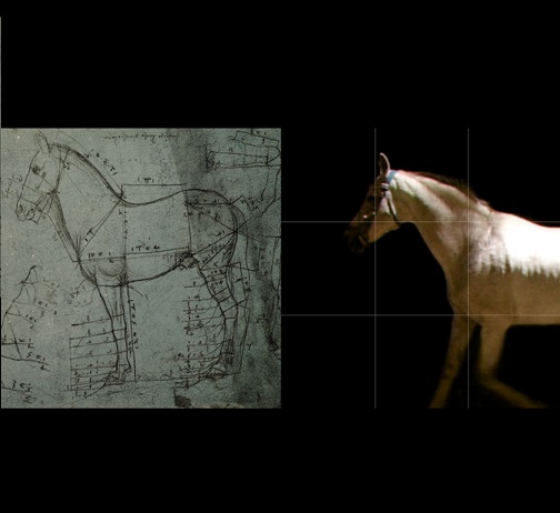 LEONARDO il cavallo