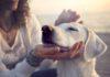 crocchette per cane - come sceglierle