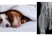 controlliamo la displasia dellanca del nostro cane