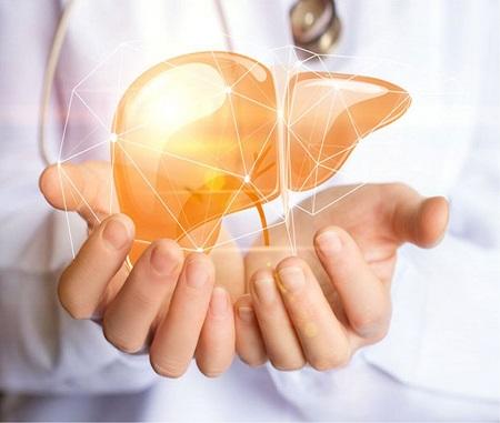 Fegato grasso - scoperto il meccanismo di origine nellintestino r