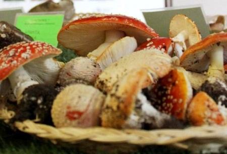 Legnano - 41esima mostra micologica - Funghi dal vero