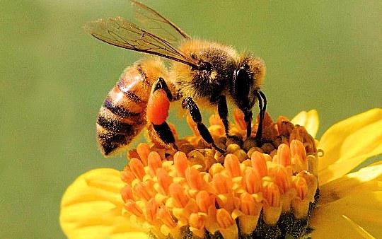Protezione api