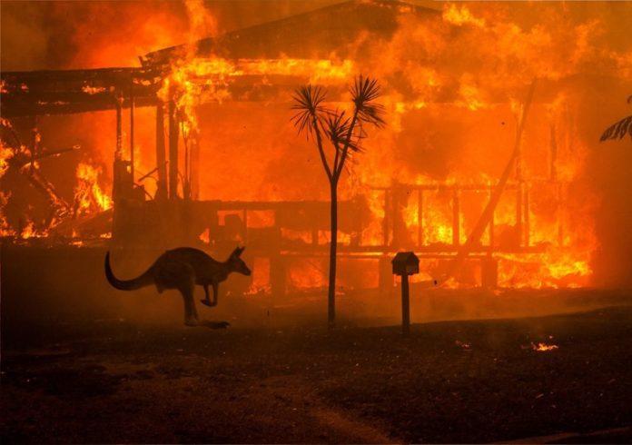I roghi che hanno devastato lAustralia