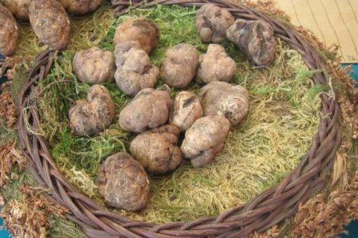 Volterra - mostra mercato tartufo marzuolo