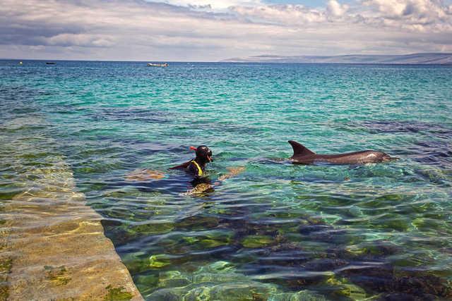 Dolphin son the Wild Atlantic Way