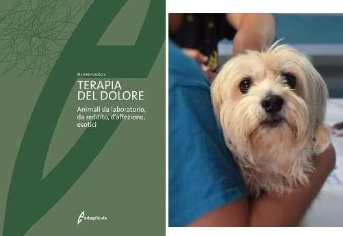 Terapia del dolore sugli animali