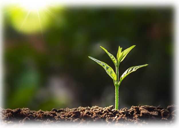 Il 2020 un anno molto speciale per chi si occupa di salute delle piante