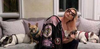 Lady Gaga cani