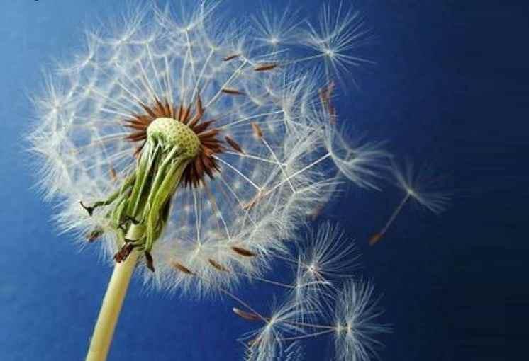 Allergie primaverili pollini