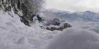 cabotina neve