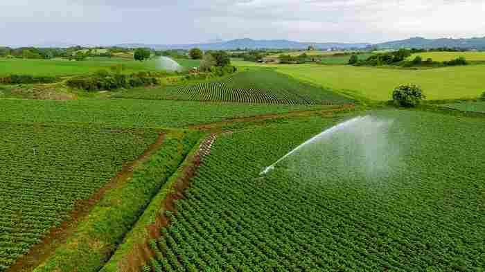 campo coltivazione