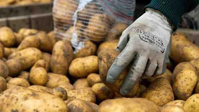 patata nel bins con mano