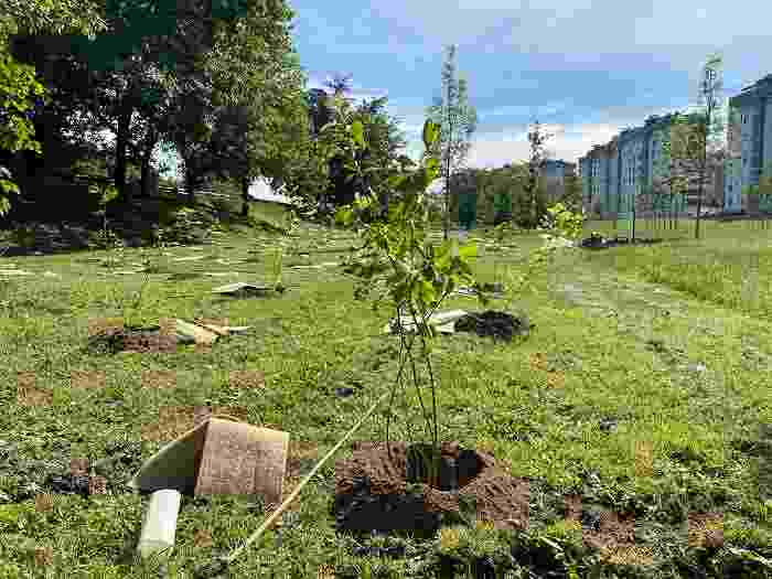 Forestami Piantumazione Parco dei Fontanili 03 LD