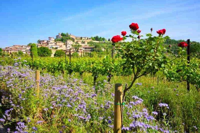 Lantieri vigne