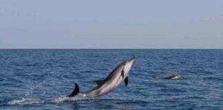 Foto delfini Archivio MareCamp