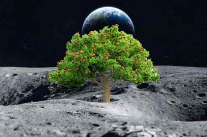 coltivazione luna spazio min